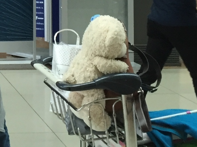 Loyal Teddy riding in a cart at the airport.